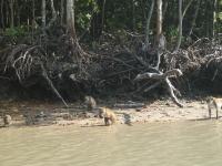 mangrove-2-043