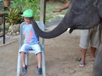 Elefantridning