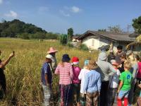 Thaitema Risfält med barn