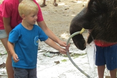 Elefantridning 2012 Hua Hin