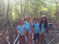 31 Mangrowe