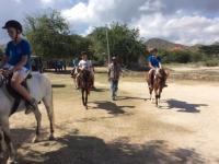 36 hästridning