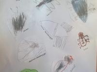 Lomaa lär sig om olika skalbaggar.