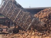 Kokosnötsfabriken