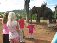 elefantridning-o-v-46-005