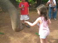 elefantridning-o-v-46-048