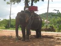 elefantridning-o-v-46-057
