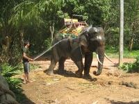 elefantridning-o-v-46-069