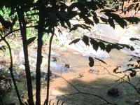 Apfamiljen tar ett svalkande dopp och leker i vattnet