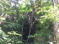 Den magnifika tigergrottan i djungeln