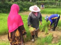 Riset barnkammare innan plantering