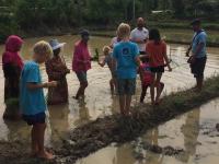Vi planterar ris